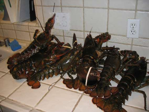 Six Lobsters